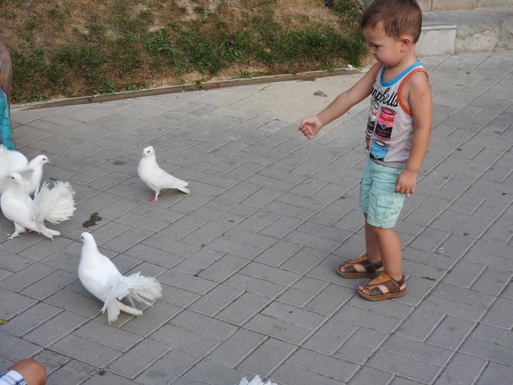 Артем и голуби